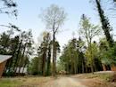 Scaninavian lodges set amongst a woodland setting