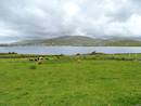 View of Dingle Bay from the garden of the property